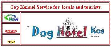 Dog Kennel Service for visitors