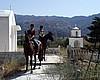 Pferd und Ponyreiten bei Alfa-Horse in Amaniou